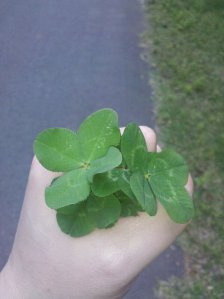fourleaf clovers